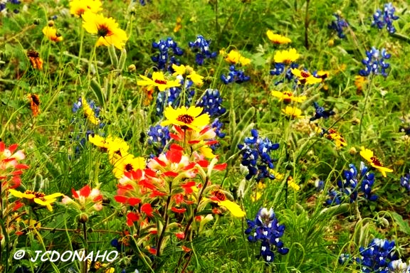 Texas Mixed Wildflowers