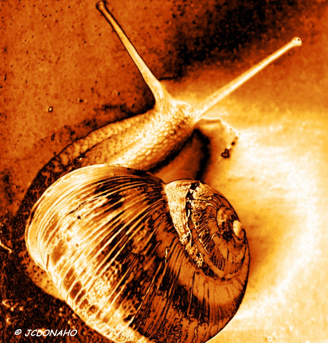 Snail in Gold